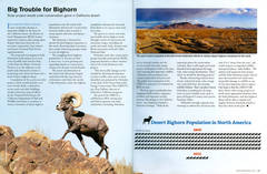 Big Trouble for Bighorn