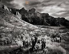 Teddybear Cholla, Cylindropuntia bigelovii, Ocotillo, Fouquieria splendens, Saguaro, Carnegiea gigantea, Kofa Mountains, winter, Arizona,
