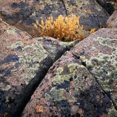 Dried, autumn, grasses, embrace, lichen, granite, Santa Rosa Plateau, California