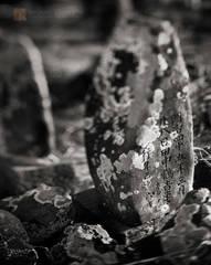 forgotten, lichen, grave, Kaua'i, Hawai'i