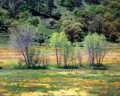 picture, photo, spring, meadow, wildflowers, impressionistic, landscape, fine art print