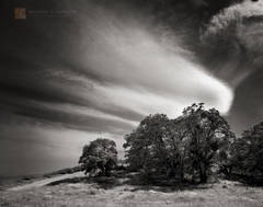 Old Ridge Route, oak trees, Quercus, cirrus, clouds, Sierra Pelona, Angeles National Forest, California