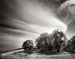 picture, photo, Old Ridge Route, oak trees, clouds, sky, black and white, fine art print