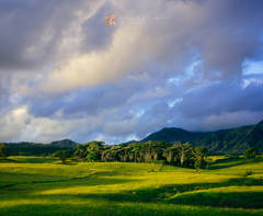 beautiful, clouds, sunrise, lush, trees, landscape Anahola, Kaua'i