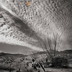 Cirrocumulus,clouds,Ocotillo,Fouquieria splendens, Teddybear,Cholla, Cylindropuntia bigelovii, Colorado Desert, Anza-Borrego, California