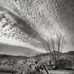 Ocotillo, Fouquieria splendens, cholla, clouds, sky, hills, mountains, Sonoran Desert, Colorado Desert, black and white, fine art photograph, fine art print, photo, picture