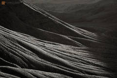 photo,picture,highlights,slopes,ridges,forms,layers,repeating,roots,tree,canyon,wash,shadows,Grapevine Mountains,Death Valley
