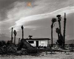 abandoned, shack, dead, dying, palm trees, Washingtonia filifera, dramatic, lenticular, clouds, Colorado Desert, California