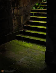 moss,flowers,plants,green,19th century,steps,Old Royal High School,light,glow,dark,shadows,mystery,New Parliament House,Calton Hill,Edinburgh,Scotland.