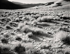 black and white, fine art photograph, fine art print, photo, picture, Eureka Valley, Death Valley, tumbleweeds, cracked mud, shadows, sand dunes