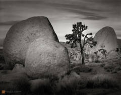 photo,picture,large format,b/w,b&w,black and white,quiet,peaceful,tranquil,morning,dawn,boulders,Yucca brevifolia,Lost Horse Valley,Joshua Tree,clouds,rocks,granite,formation,zen,b&w