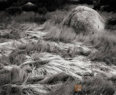 subtle, design, delicate, wind, blown, grass, desert, canyon, Anza-Borrego, California
