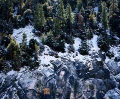 pine trees, fir trees, snow, granite, slabs, Sierra Nevada, winter, snow