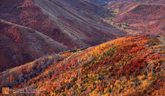 picture, photo, autumn, fall color, Wasatch Mountains, canyon, landscape, fine art print