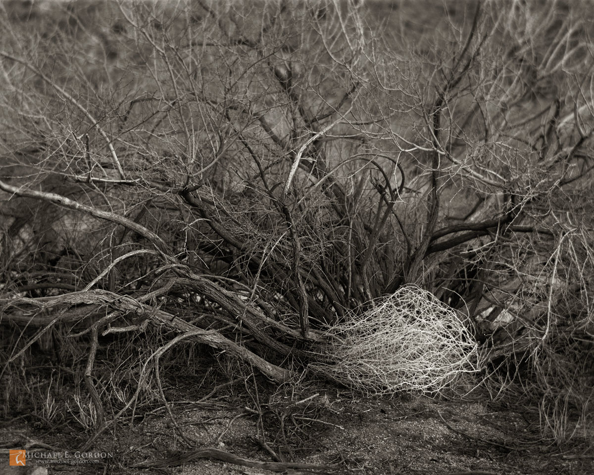 photo,picture,large format,black and white,b/w,b&w,fine art,Tumbleweed,Salsola tragus,Catclaw,Acacia greggii,Joshua Tree National Park,shrub,bush,tree,b&w, photo