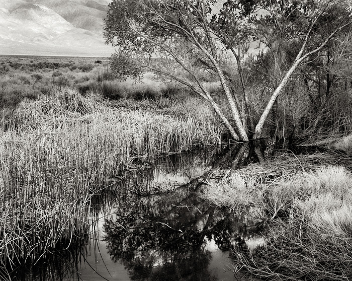 Owens Valley, cottonwood trees, pond, water, reeds, grasses, reflection, black and white, fine art photograph, fine art print, photo, picture, photo