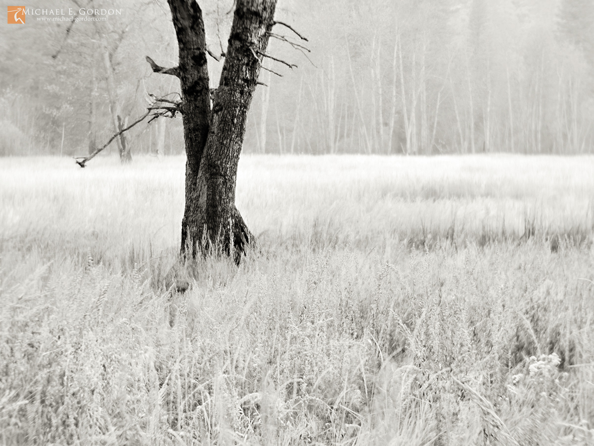 black and white, fine art, photograph, print, photo, picture, misty, msyterious, fog, meadow, cottonwood, trees, grasses, wildflowers, winter, autumn, , photo