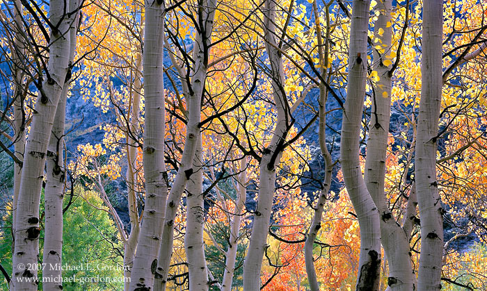 picture, photo, aspen, autumn color, fall color, Bishop Creek, High Sierra, landscape, fine art print, photo