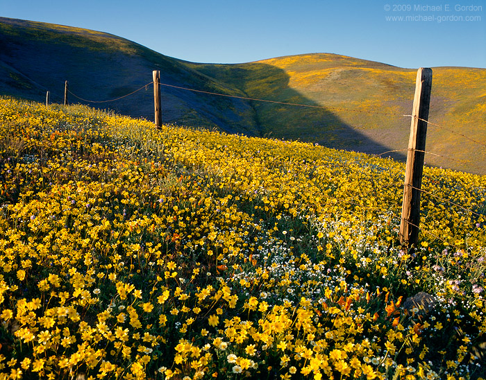 photo, picture, Gorman, yellow wildflowers, Coreopsis, blue sky, fence line, photo