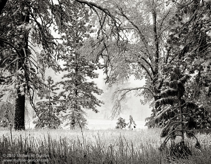 winter, snow, snowfall, snow-covered, meadow, pine trees, oaks, ethereal, atmosphere, peaceful, light, Yosemite Valley, Yosemite National Park, California, black and white, color, large format, photo, photo