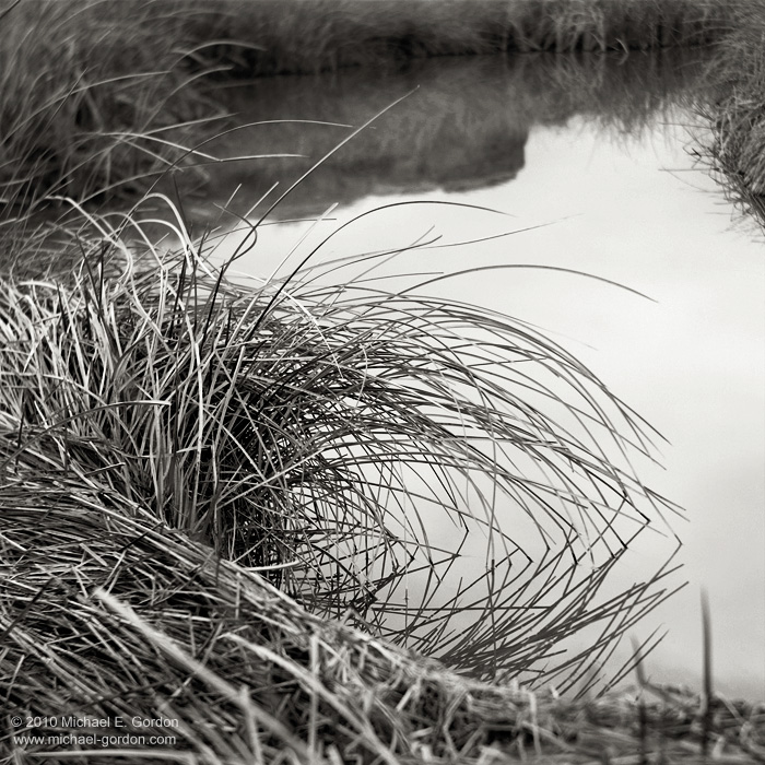 grass, Amargosa River, water, Death Valley, texture, design, black and white, fine art photograph, fine art print, photo, picture, photo