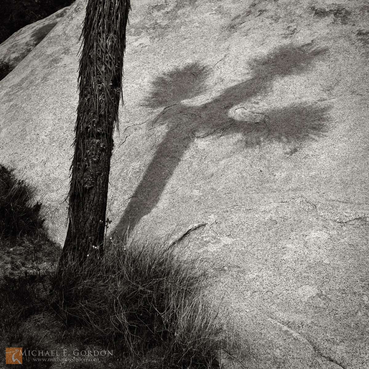 Joshua tree,Yucca brevifolia,shadow,cast,crucifix,cross,symbol,quartz monzonite,boulder,granite, photo