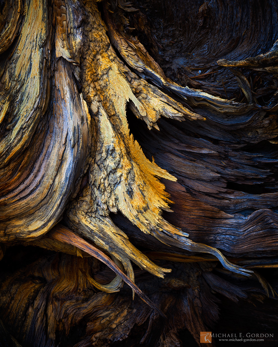 photo,picture,color,tree,trunk,wood,snag,sculptured,graphic,form,dark,wing,design,roots, photo