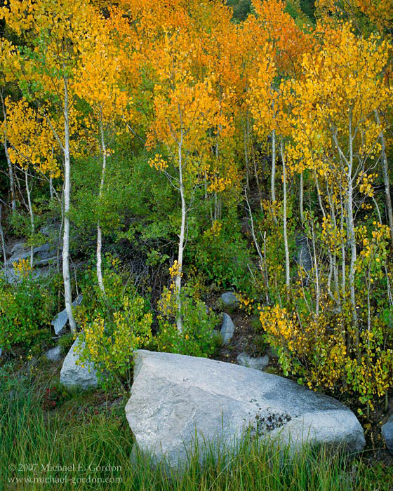picture, photo, aspen, autumn, fall color, Sierra Nevada, Rock Creek Canyon, landscape, fine art print, photo
