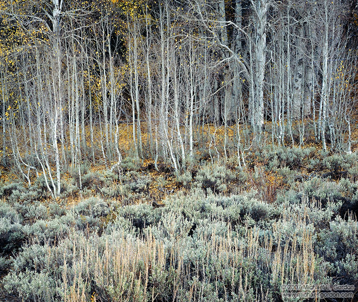 picture, photo, aspen, sagebrush, autumn, fall color, Sierra Nevada, landscape, fine art print, photo