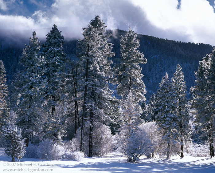 picture, photo, San Gorgonio, Horse Meadows, clouds, breaking storm, snow covered, fresh, backlit, pine trees, fine art print, photo