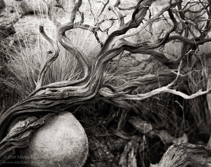 Manzanita, Arctostaphylos, twisted, grasses, boulder, Joshua Tree National Park, Mojave Desert, black and white, fine art photograph, fine art print, photo, picture, photo