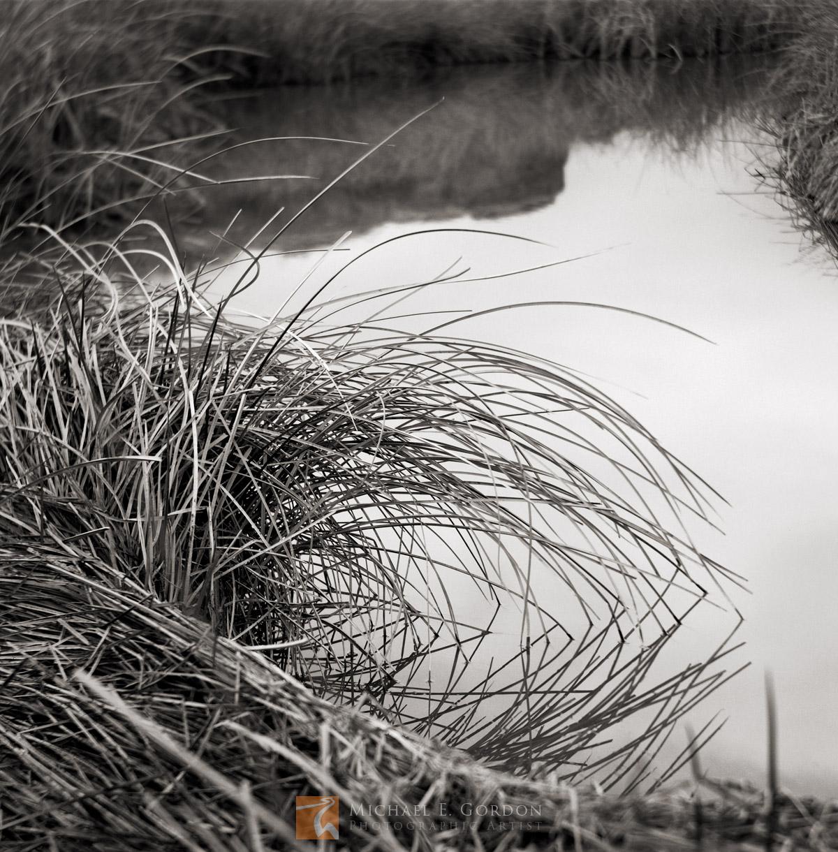 riverside, quiet, cattail, Typha angustifolia, curve, Amargosa, river, California, Mojave Desert, photo