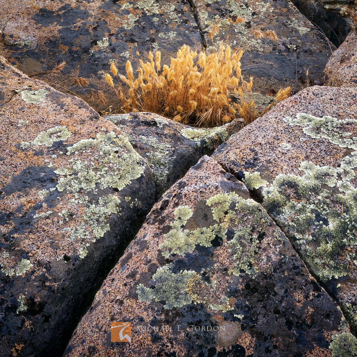 Dried, autumn, grasses, embrace, lichen, granite, Santa Rosa Plateau, California, photo