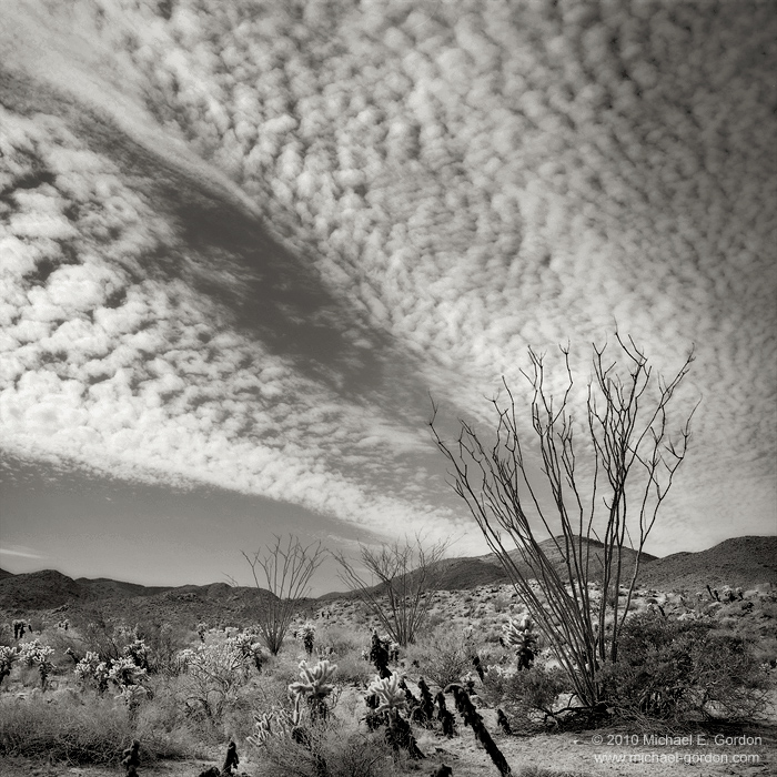 Ocotillo, Fouquieria splendens, cholla, clouds, sky, hills, mountains, Sonoran Desert, Colorado Desert, black and white, fine art photograph, fine art print, photo, picture, photo