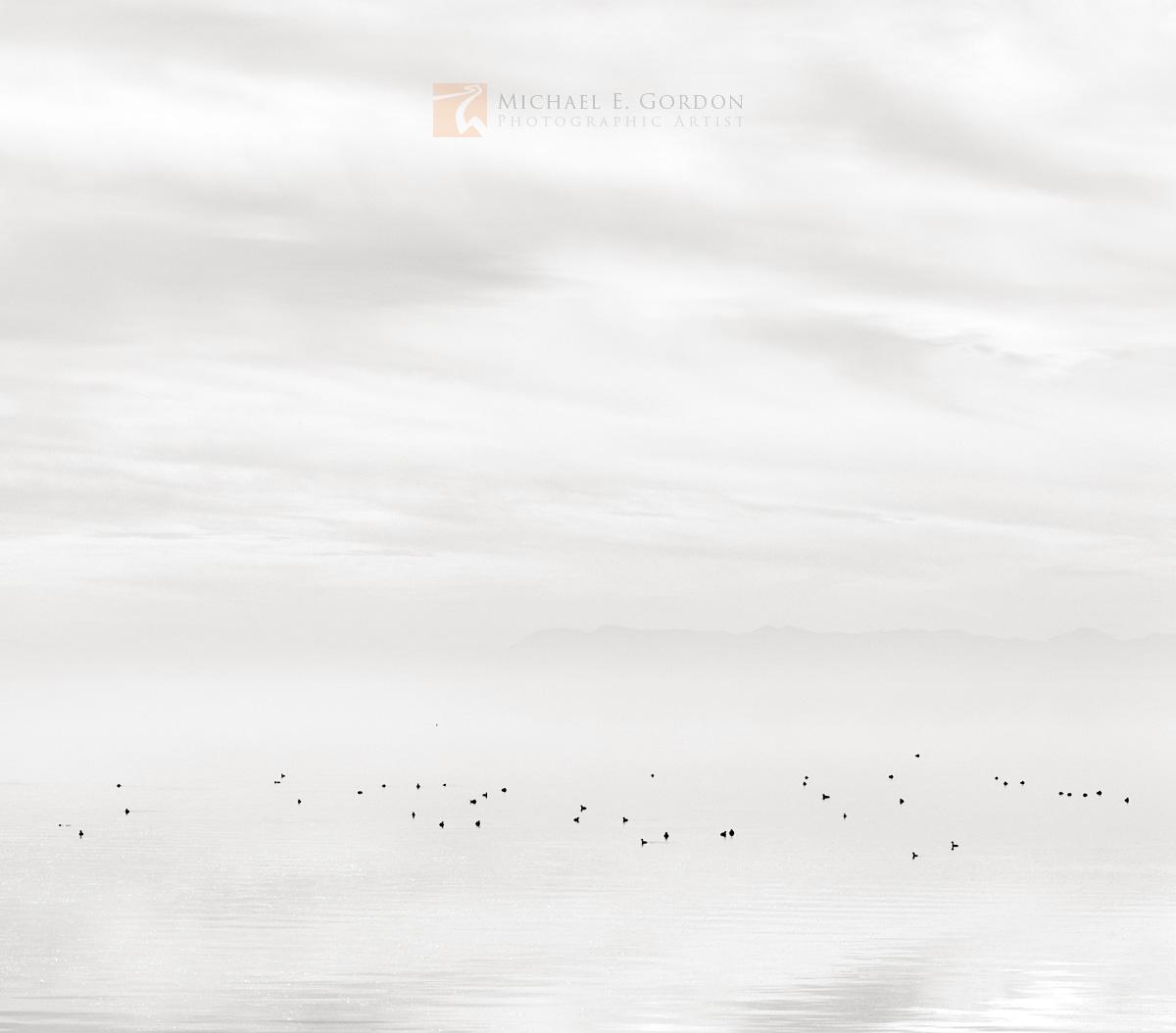 EaredGrebes (Podiceps nigricollis) appear to hover in an overcasthigh key atmosphere.Logos and watermarks are...
