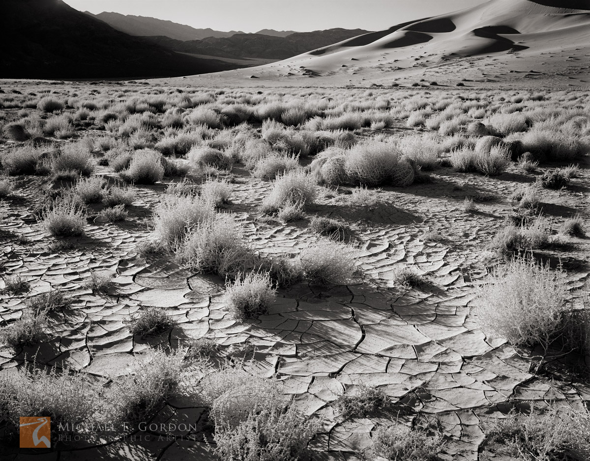 Morning light rakes tumbleweed (Salsola) and cracked mud before the Eureka Dunes and Last Chance Mountains.Logos and watermarks...