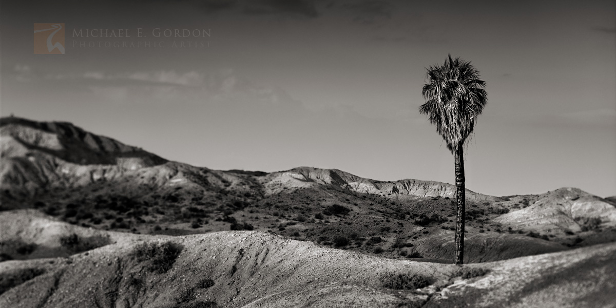 Una Palma, Anza-Borrego, badlands, light, desert, Washingtonia filifera, Colorado Desert, Sonoran desert, photo