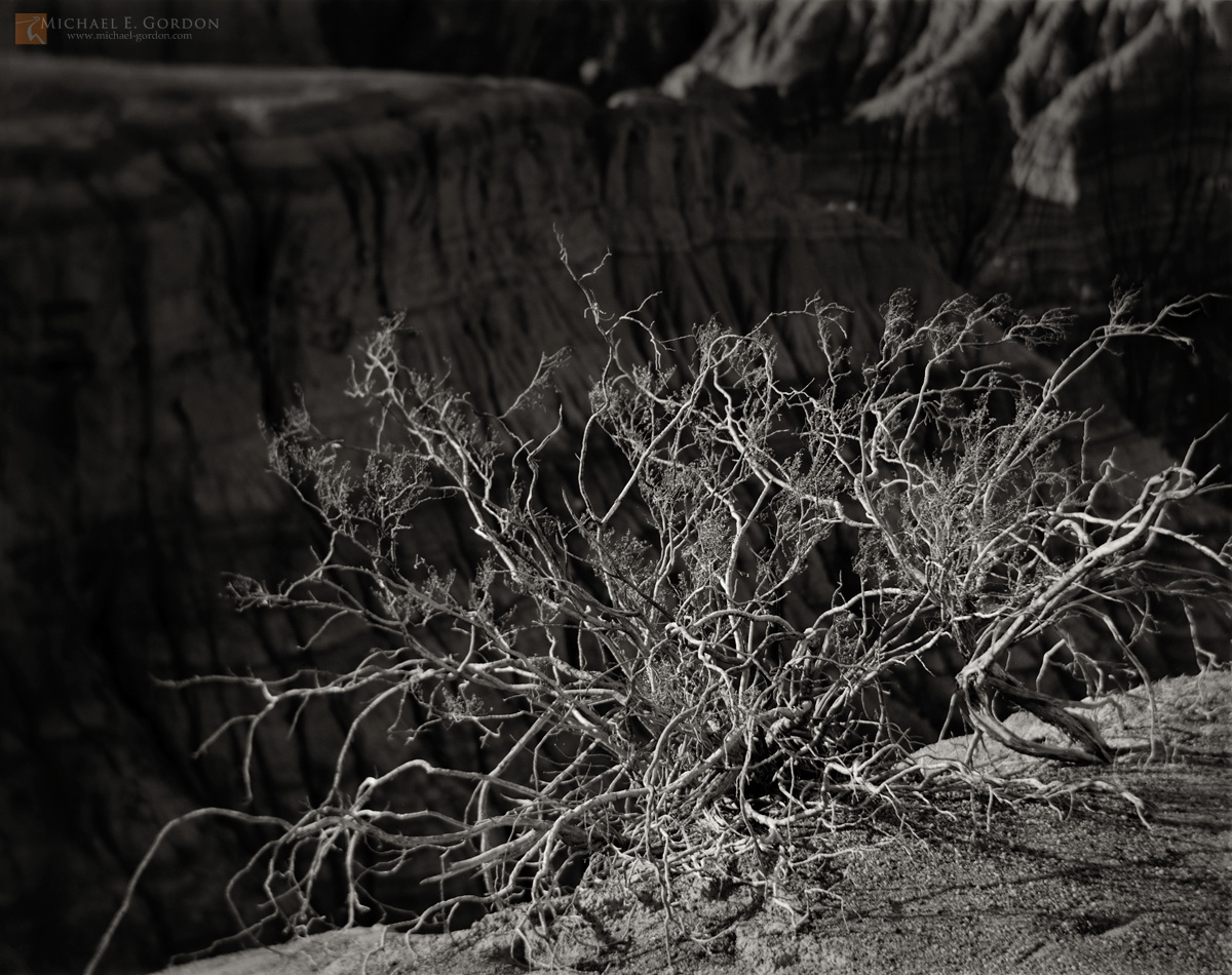 photo,picture,b/w,b&w,black and white,Creosote,shrub,Larrea tridentata,weathered,old,growth,ravaged,sunlight,shadows,edge,badlands,Ubehebe Crater,Death Valley,b&w, photo