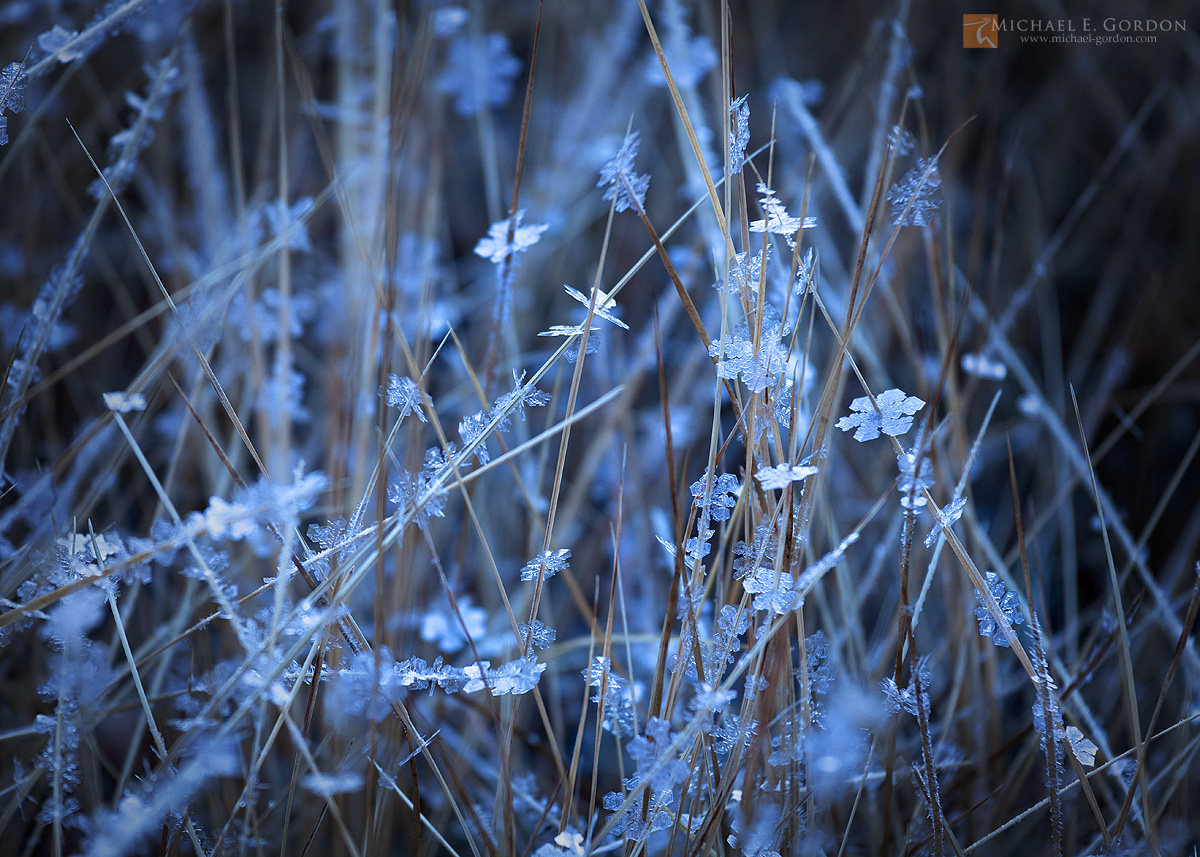 color,photo,picture,delicate,crystals,hoar,frost,ice,autumn,High Sierra,meadow,sedge,Carex,blue,cold,cool, photo