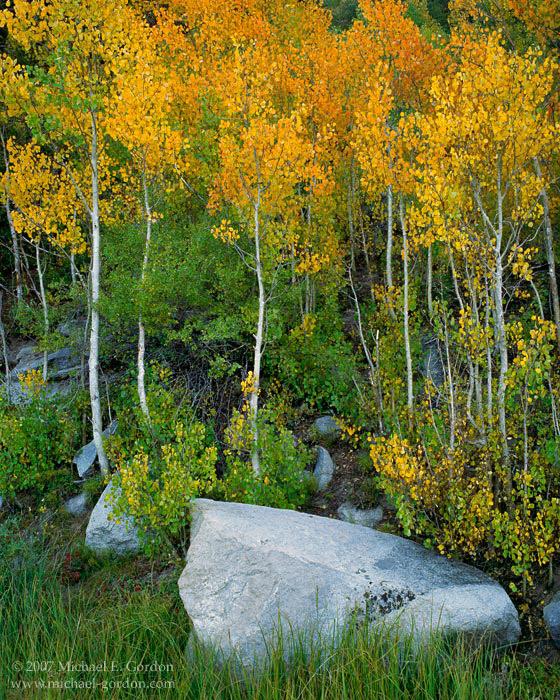 picture, photo, aspen, autumn, fall color, Sierra Nevada, Rock Creek Canyon, landscape, fine art print, photo