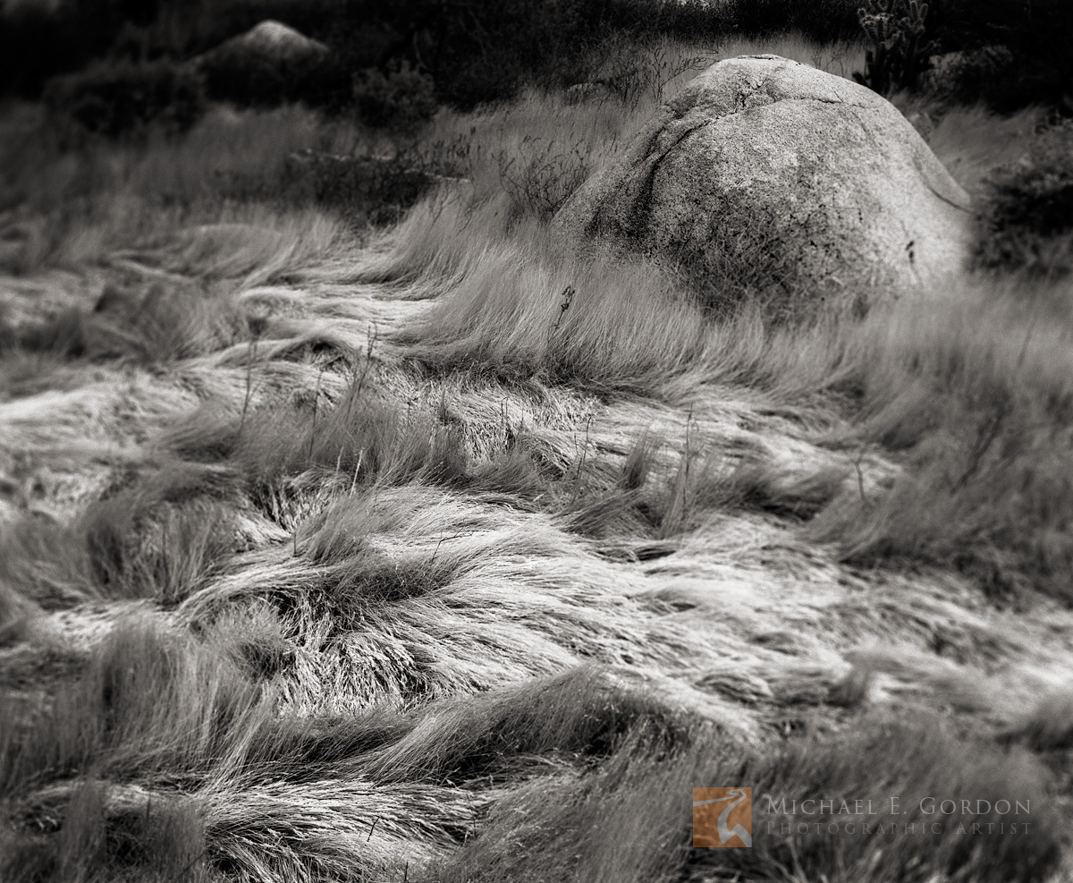 Carrizo Canyon, Carrizo Gorge, Sonoran Desert, windblown grass, delicate, design, boulder, Anza-Borrego, black and white, fine art photograph, fine art print, photo, picture, photo