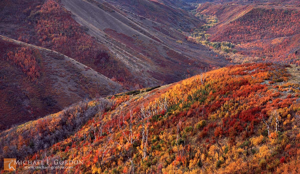 picture, photo, autumn, fall color, Wasatch Mountains, canyon, landscape, fine art print, photo